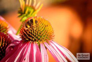 bijen op bloem