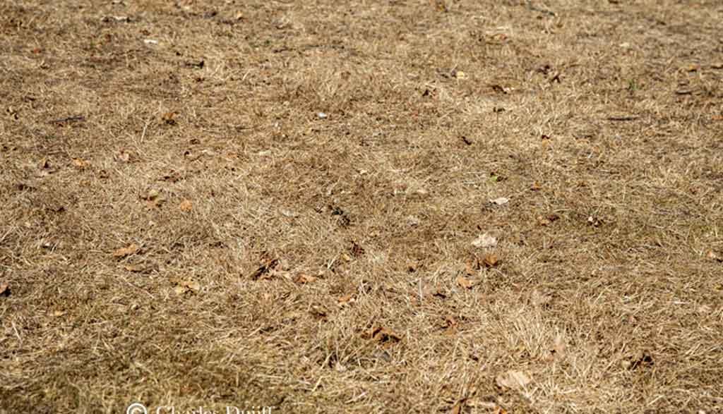herstellen uitgedroogd gras