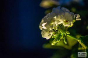 Verlichting bloem tuin