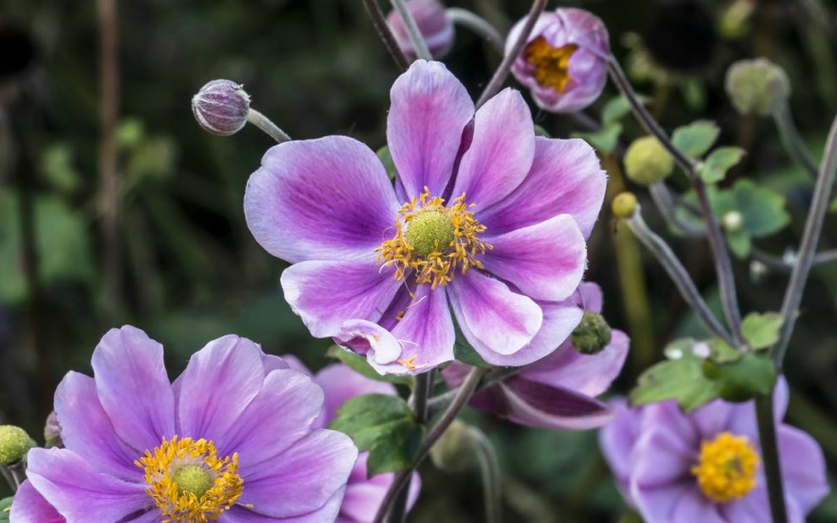 Herfstsfeer tuin najaarsbloemen
