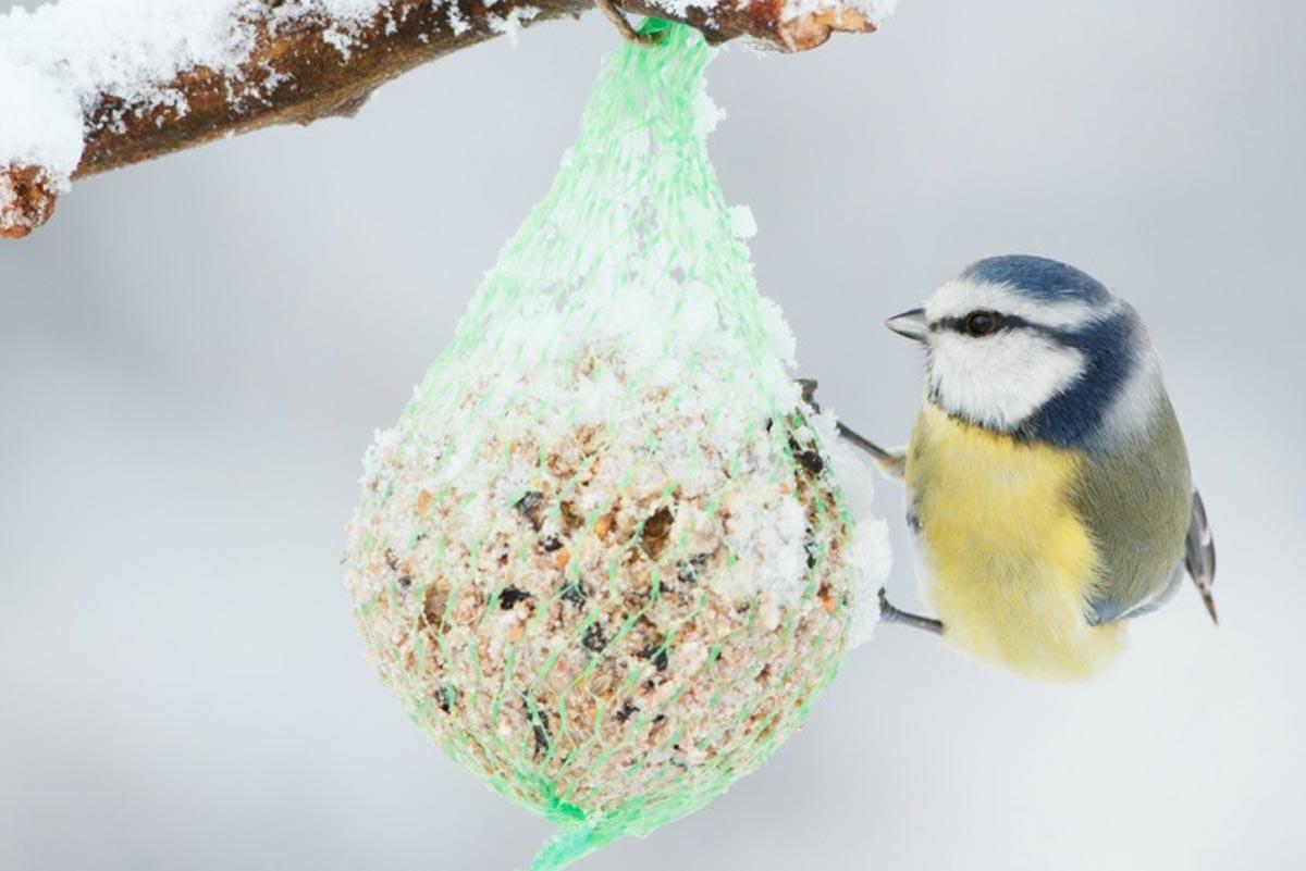 Tuin vogels voeren winter