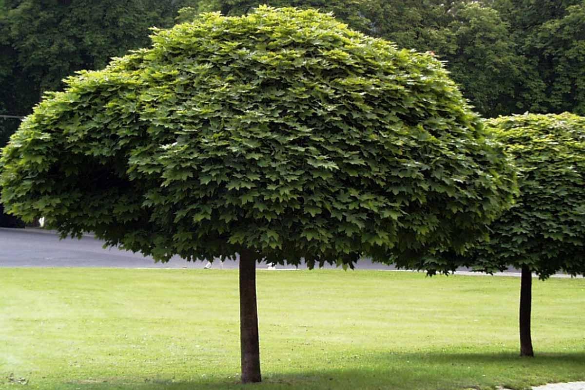 ABC bomen snoeien
