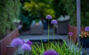 Moderne tuin bloem