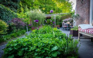 Moderne tuin groen